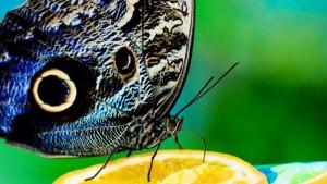 Tiere und Insekten