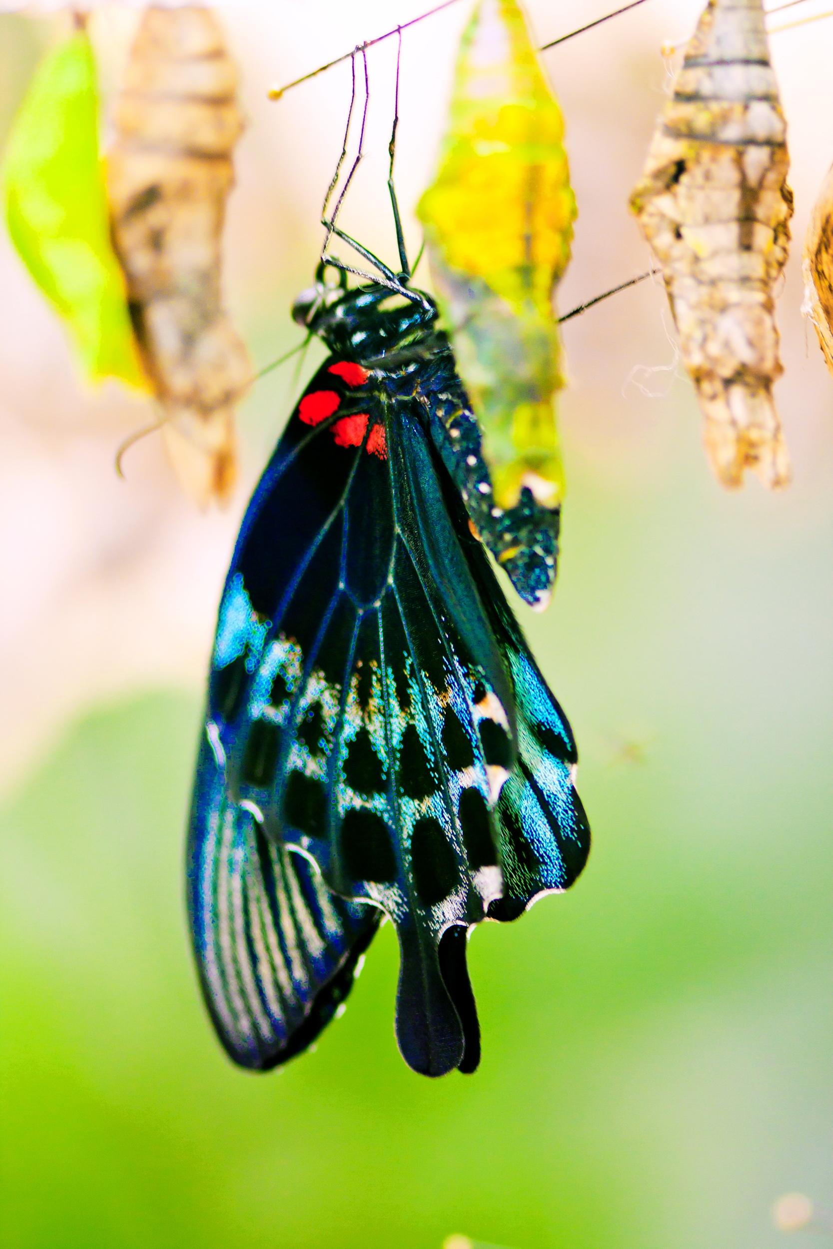 Schmetterlingsfarm01