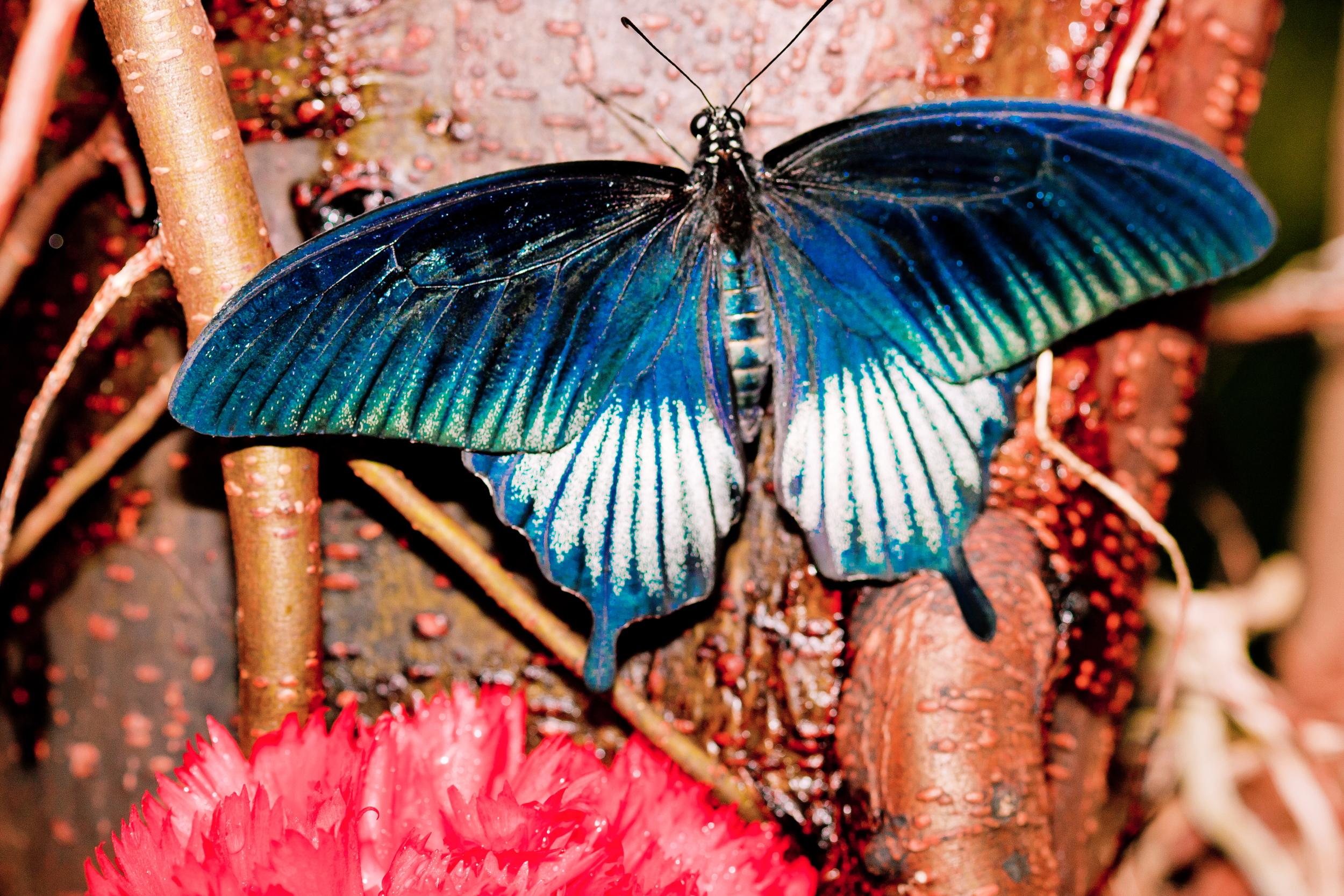 Schmetterlingsfarm03