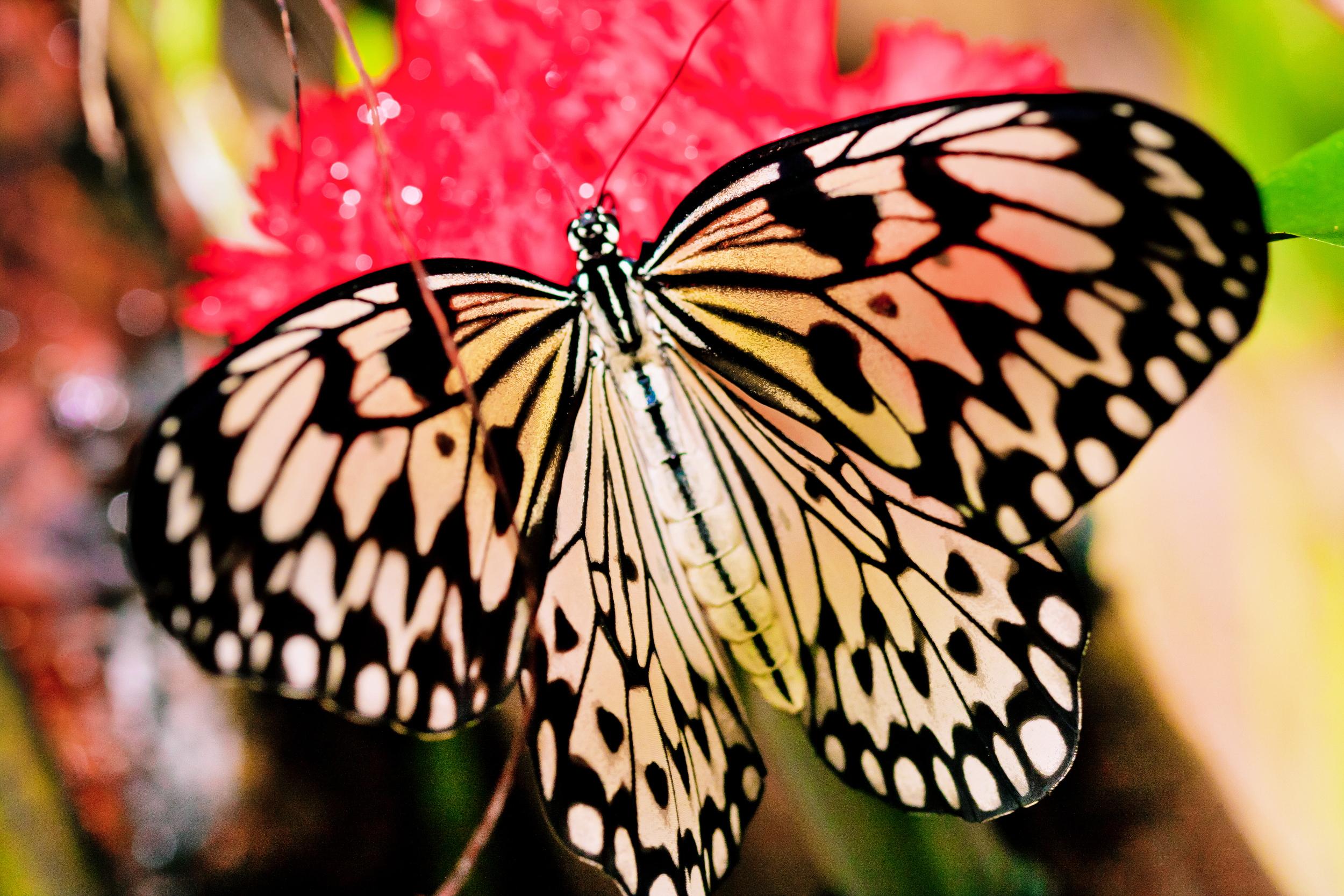 Schmetterlingsfarm04