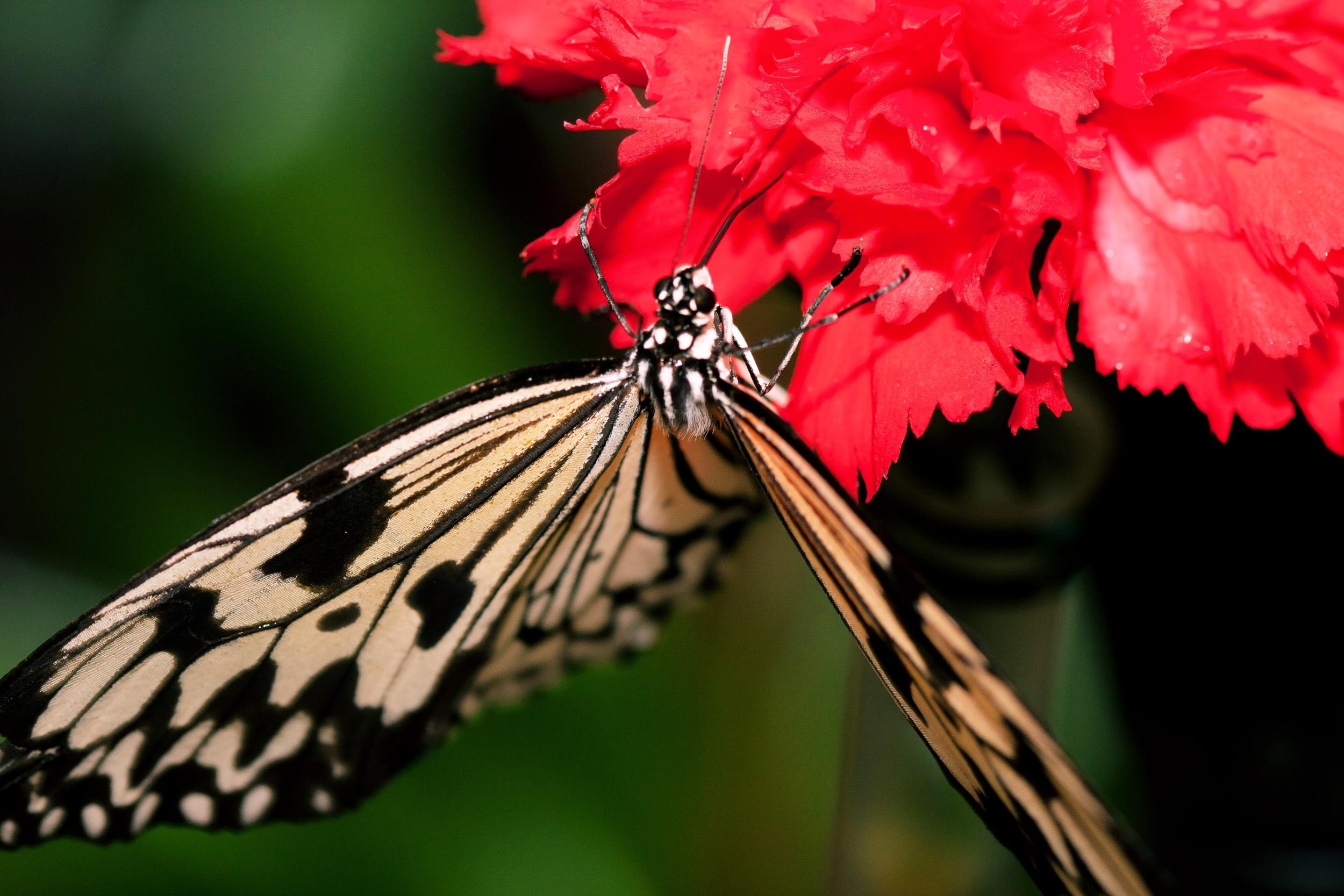 Schmetterlingsfarm05