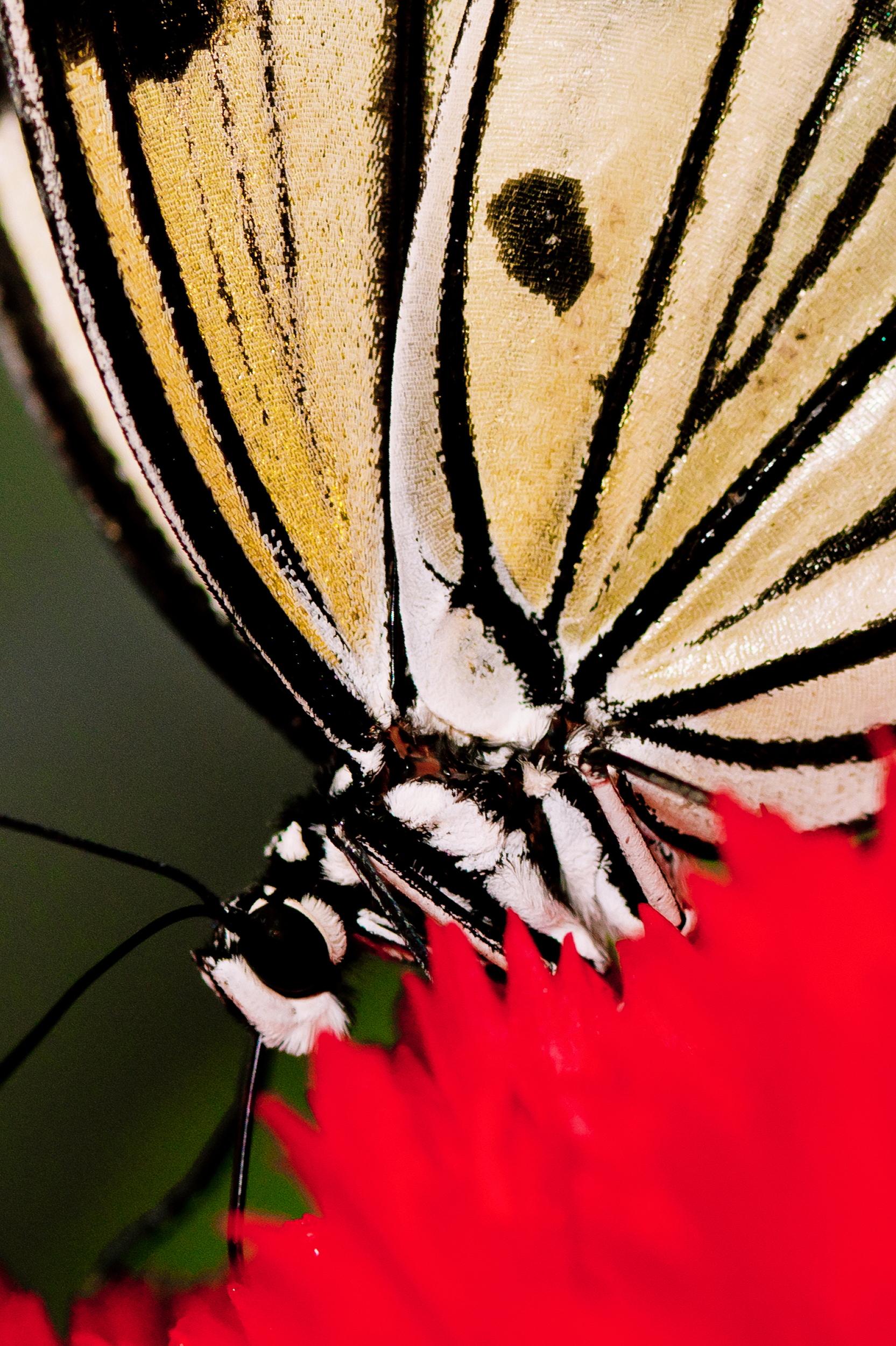 Schmetterlingsfarm06