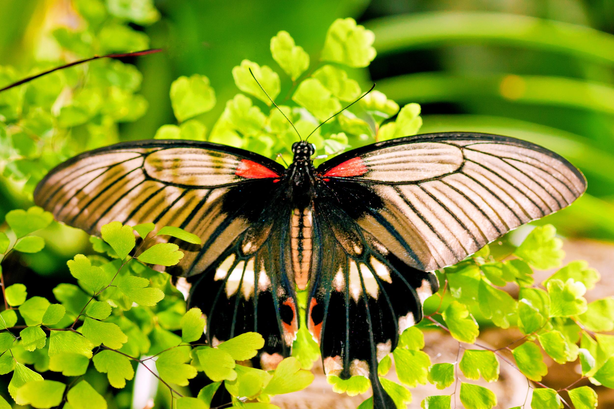 Schmetterlingsfarm07