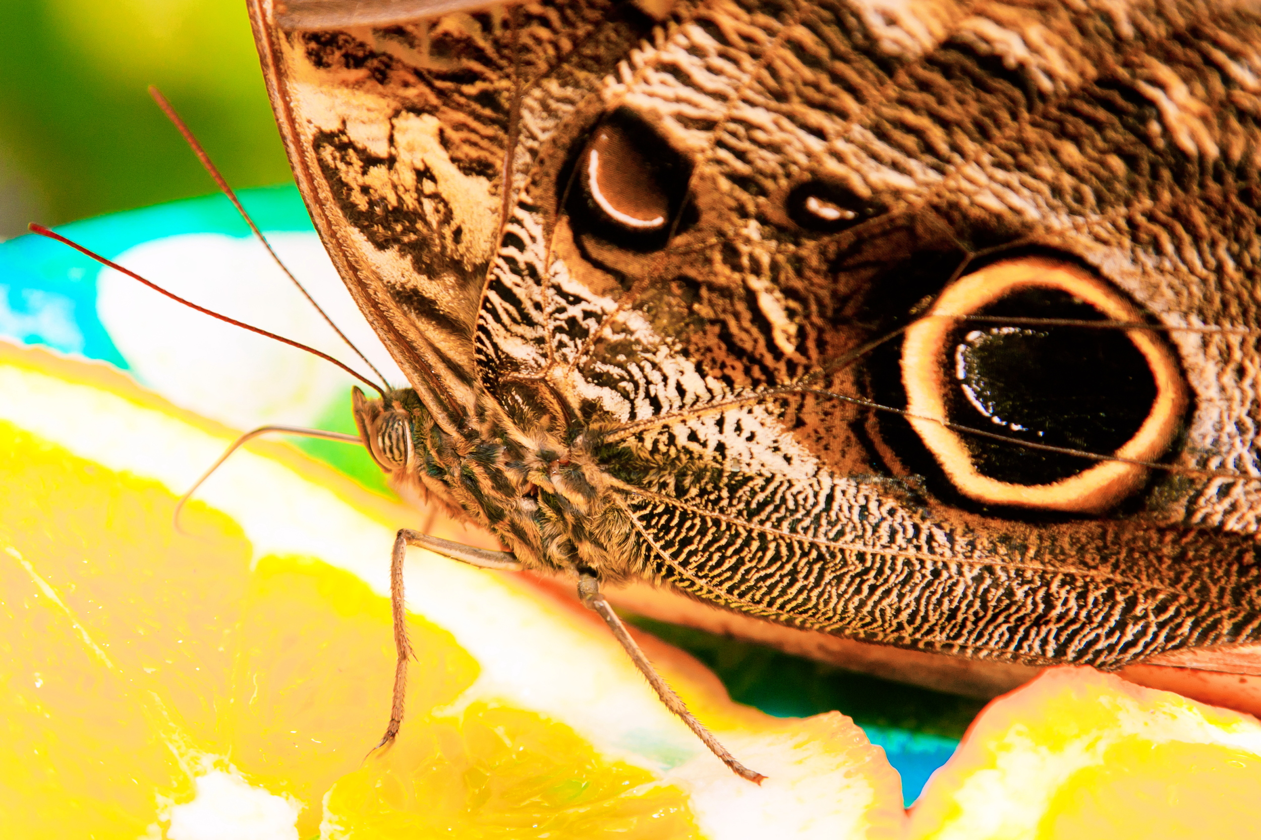 Schmetterlingsfarm08