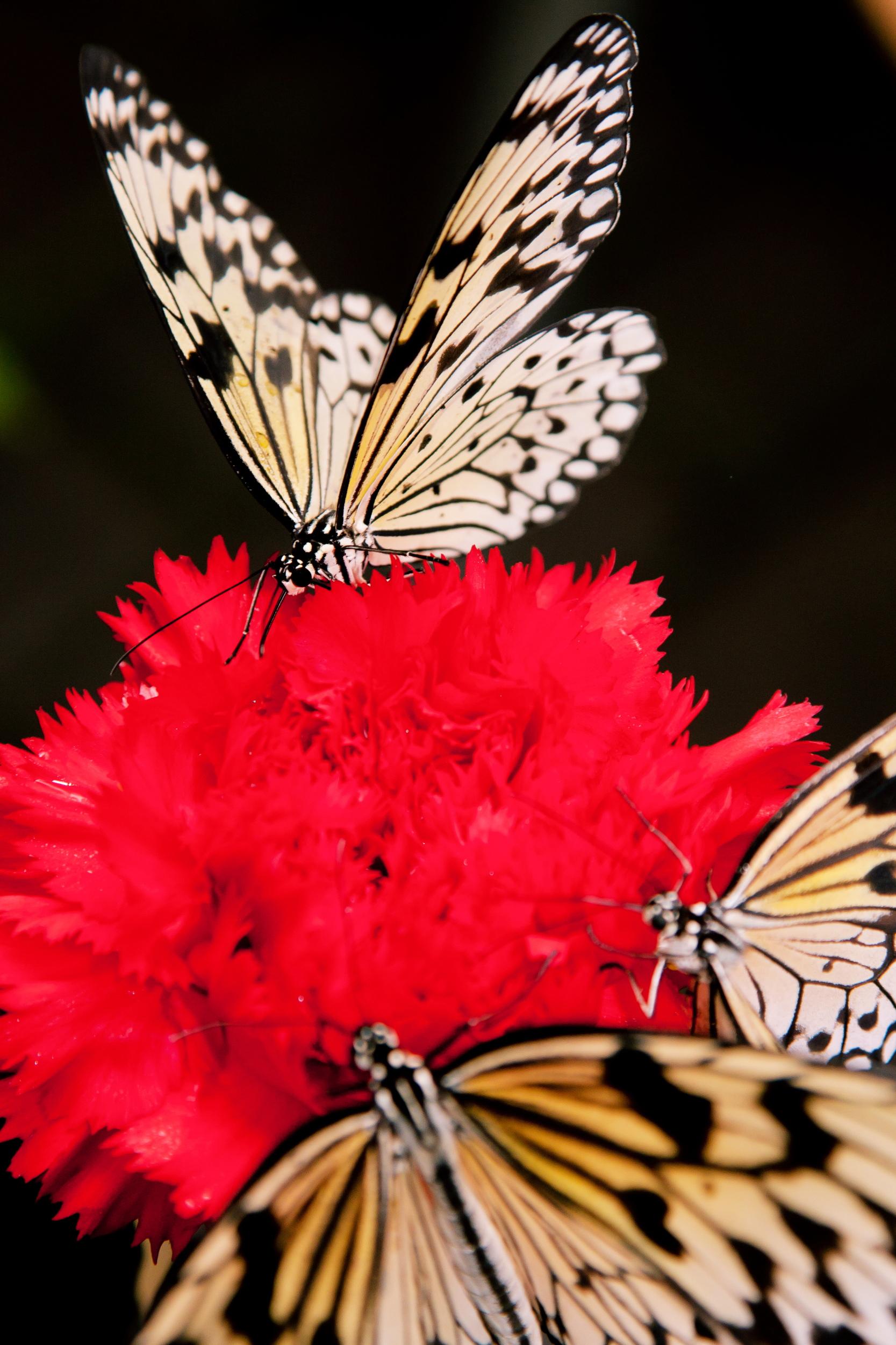 Schmetterlingsfarm09