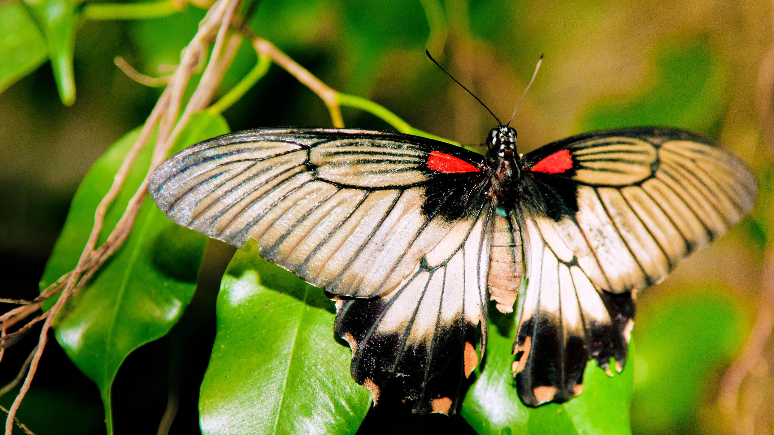 Schmetterlingsfarm11