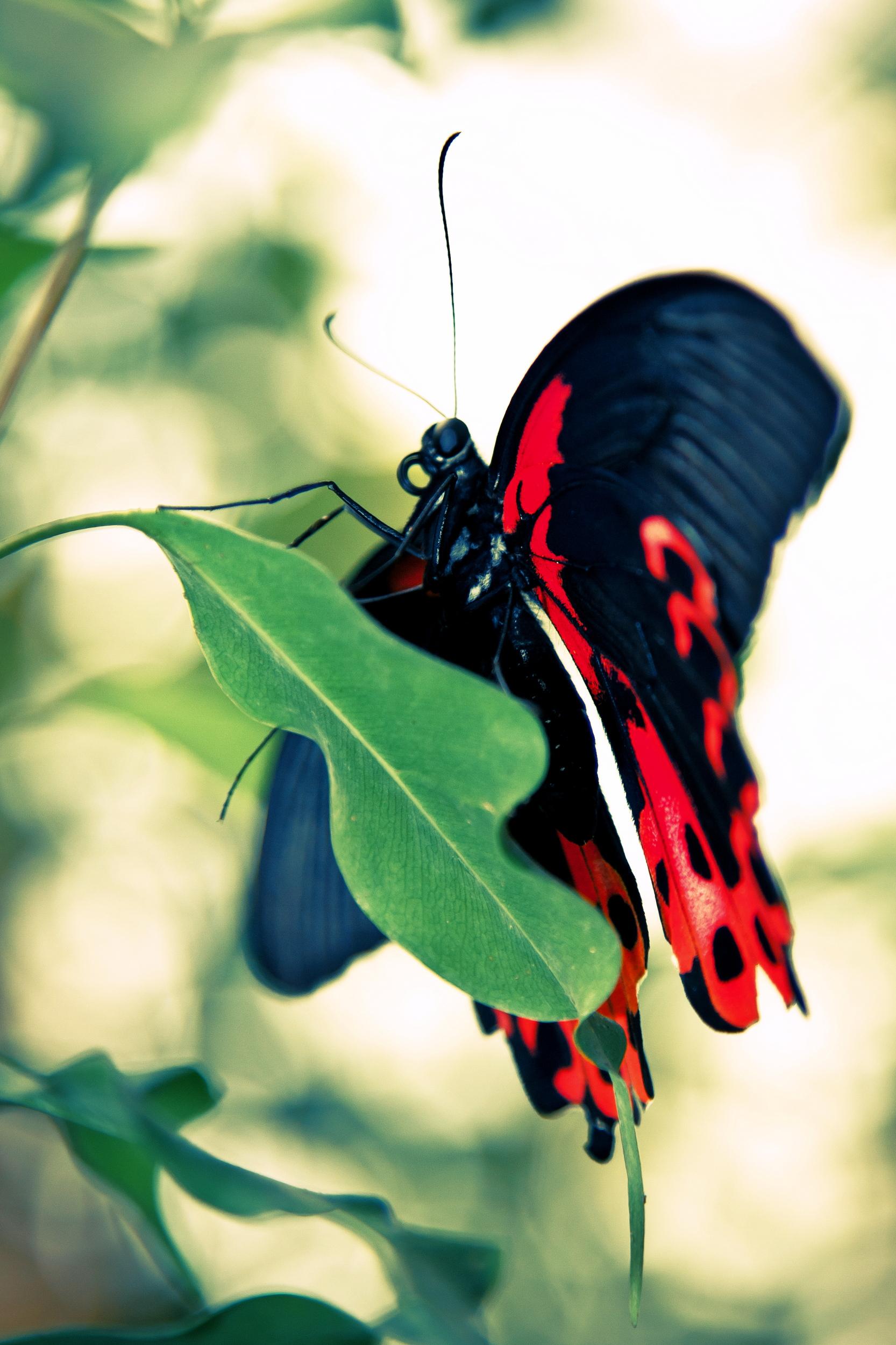 Schmetterlingsfarm12