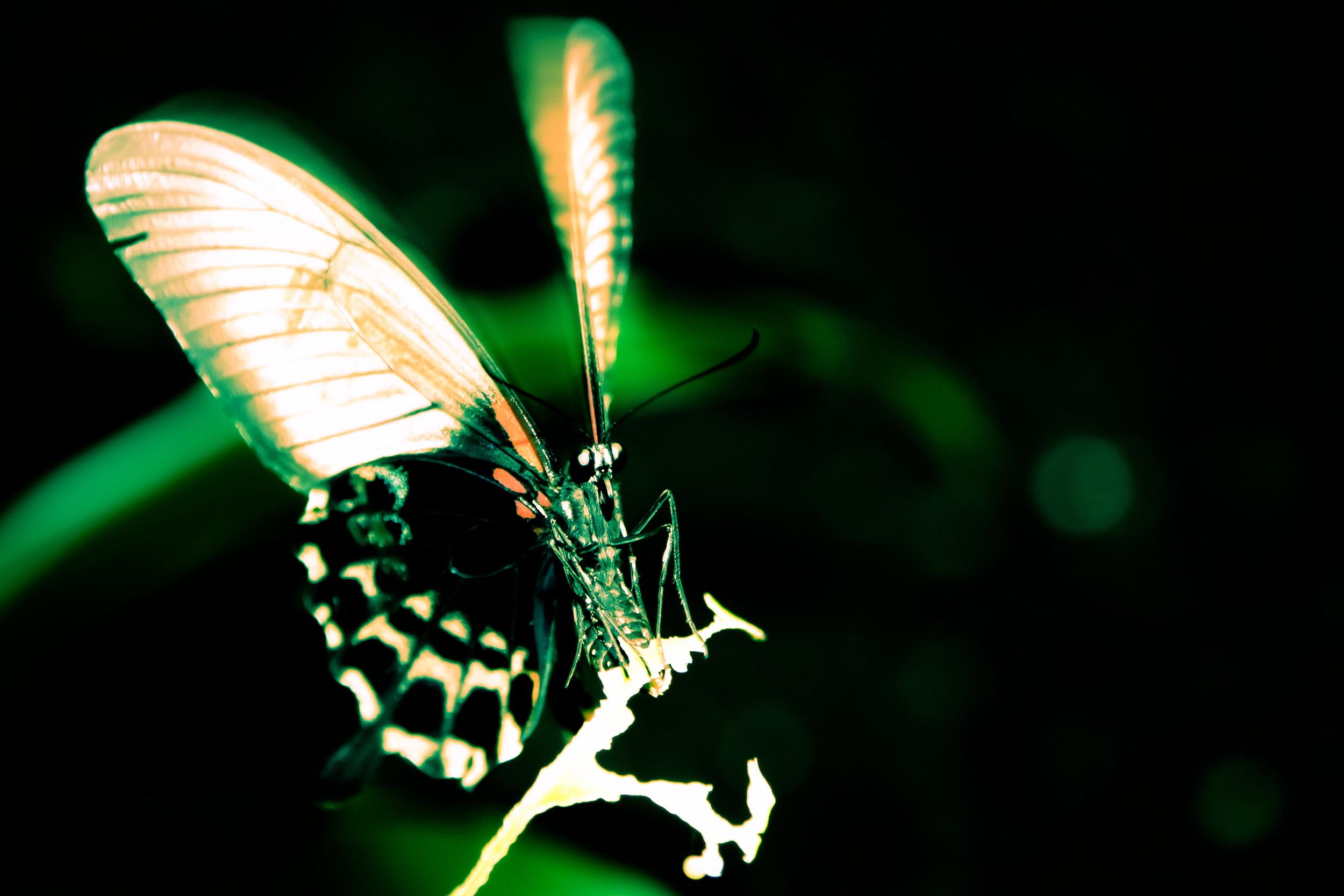 Schmetterlingsfarm13